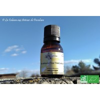 HE  Arbre à thé / Tea Tree (Melaleuca alternifolia) 15ml