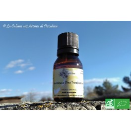 HE  Arbre à thé / Tea Tree (Melaleuca alternifolia) 15ml